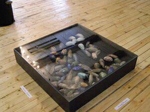 Выставка Жуки и цветы (4) - Ящик с жуками. Фото Николая Ефремова